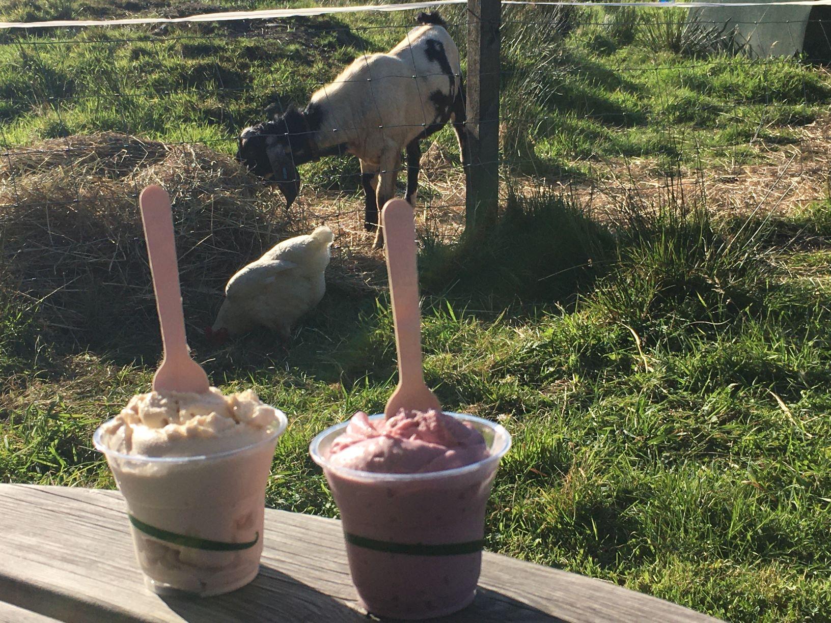achray farm goats milk ice cream